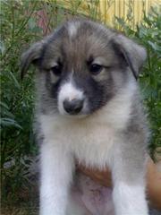 Очаровательный щенок в дар